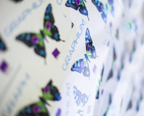 Graphium butterfly labels
